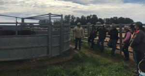 Richard Cannon and group cattle handling