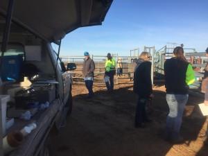 AI van cattle
