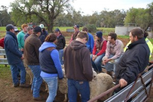 Hay Inc students learning sheep classing